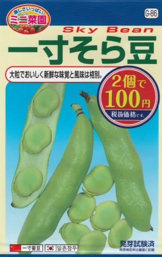 100均の種 「一寸そら豆」 品種:陵西一寸 コスト: ¥54