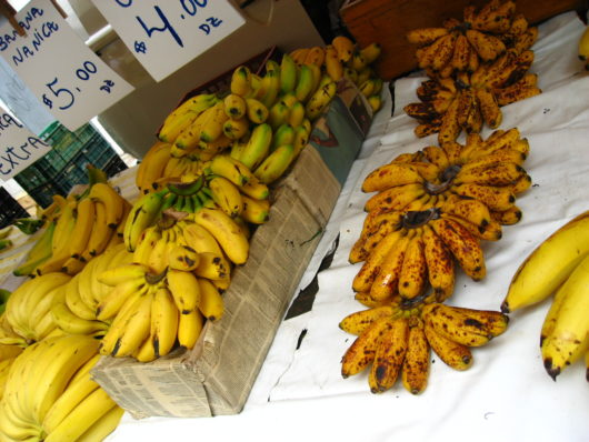 バナナ 種類
